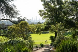 Buyers Advocate Hawthorn East Parks